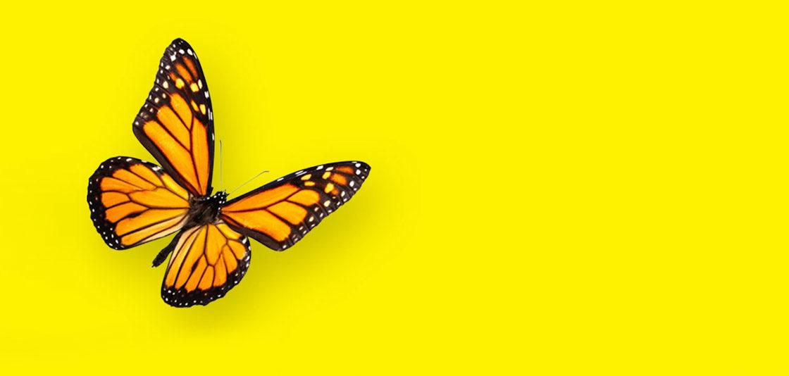 Catching butterflies at Transform Awards Europe